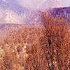نابودی 18 میلیون درخت در زاگرس بر اثر خشکسالی , اخبار چوب , خبر چوب , صنایع چوب