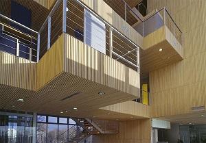 چوب بامبو ساختمانی