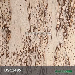 DSC1495