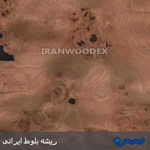 روکش چوبی آریانا-175-ریشه بلوط ایرانی